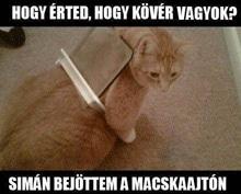 macskaajtó